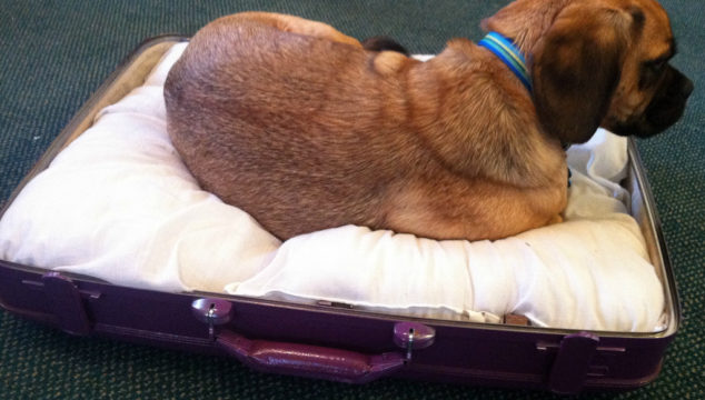 Save Your Furniture! Get a Dog Bed