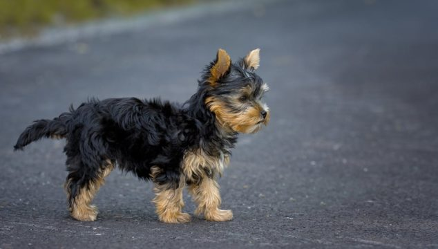 How You Can Be a Great Pet Owner for a Small Dog