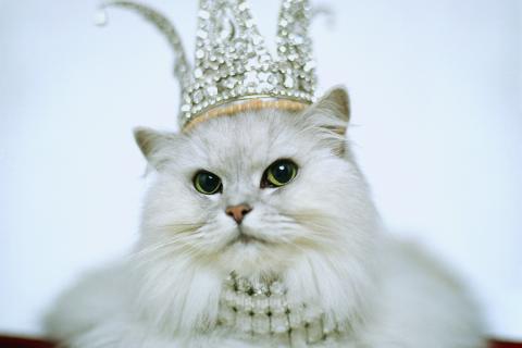 rich-cat